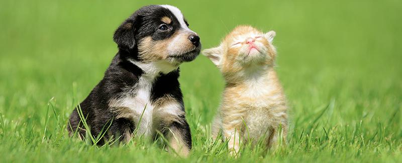 Puppy en kitten