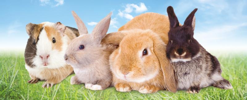 Gezondheid konijn en knaagdier